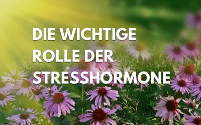 Warum unsere Stresshormone eine so wichtige Rolle spielen.